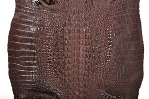 Crocodile skin can be dyed many different colors, thanks to its relatively low calcium content when compared to caiman skin.