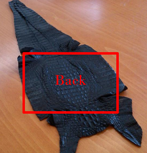 Caiman skin can be bony, so be careful to prepare sewing lines to prevent bent and broken needles.