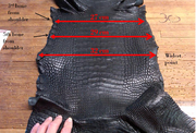 Measurement Caiman