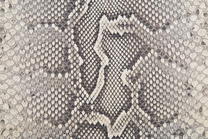 Python skin has rounded, irregular scale patterns