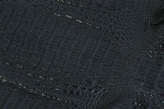 The Caiman's leather has a relatively high bone content.