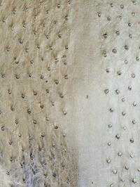 ostrich skin scratches