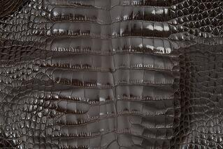 Alligator Skin Belly Glazed Brown