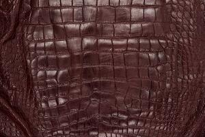 Alligator skin is incredibly useful for making men's shoes.