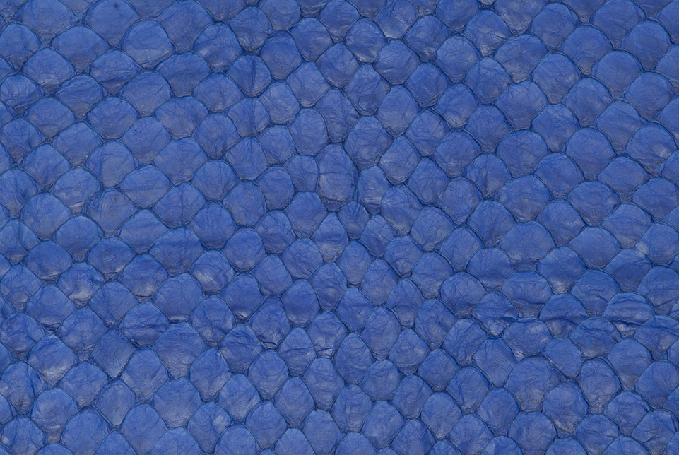 Arapaima skins are now available with metal-free tanning options.