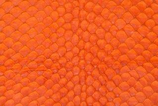ARAPAIMA-ORANGE-2.jpg