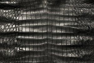 American Crocodile Black