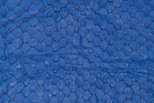 A close-up of the Arapaima's scales.
