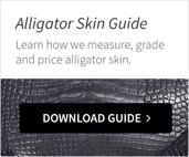 Alligator_CTA
