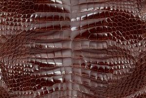glazed alligator hide can really grab the eye.